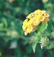 Yellow There Flower, by TREECEE