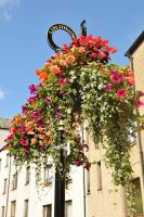 Linlithgow flowers 1 by wildplaces
