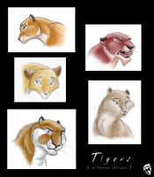 Several tiger sketches by DolphyDolphiana