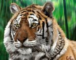 The Bengal tiger by che38