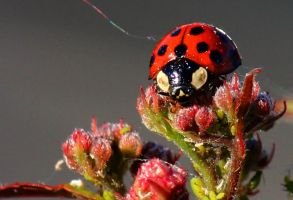 Another lady bug.. by sweatangel