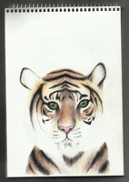 work in progress - tiger by varjules