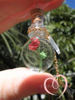 Enchanted rose close up by ilikeshiniesfakery