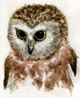Northern Saw-whet Owlet by TheGreekDollmaker