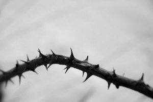 Thorns by tusss