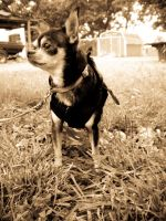 Tico in Sepia by ChicaDelMar