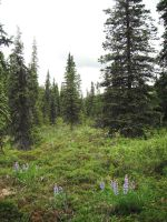 Flowers in the Forest 1 by prints-of-stock