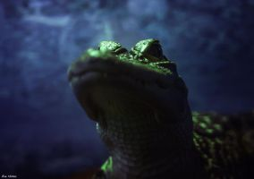 Gator Stare by EveVictus