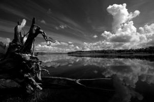 Roots by TomFindahl