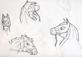 Rebel Portraits WIP by Horse-Lover95