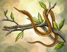 Madagascan leafnosed snake by charfade