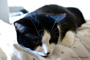 My cat again and again and again ... by TaniaMPhotographie