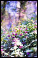 Purple moment by remousse