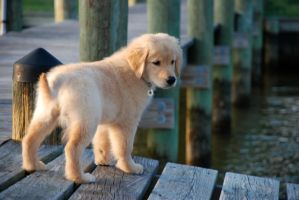 Addie on the Dock by Circadian14