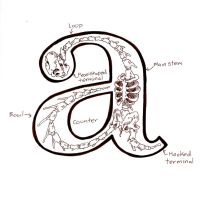 The Anatomy of the Lowercase a by FartSmasher