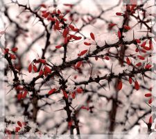 Blood and Snow by Polychromic