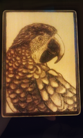 Wood Burned Macaw by Nimily