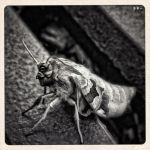.dasT.metamorphose. by dasTOK