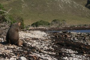 Seal on the shore by Mortitia212