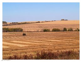 HARVEST IN THE PEACE COUNTRY by Kittihawk11