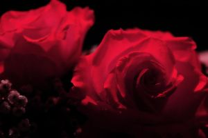 Romantic Red by S-H-Photography