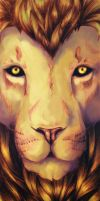 Lion's Gaze by Meralyn