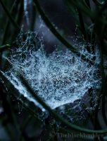 web by Theblackhadder