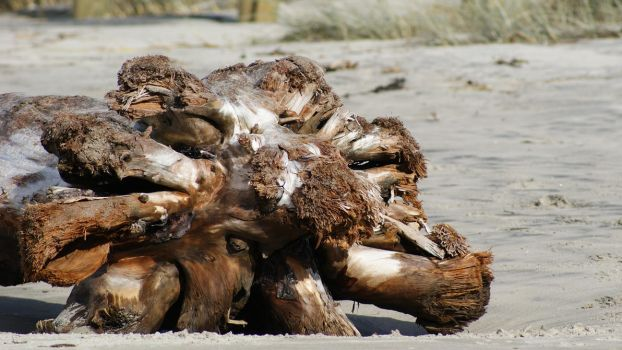 Driftwood Log by Cazz54