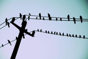 birds2 by knowyourrights