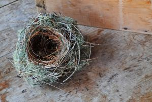 nest by LucieG-Stock