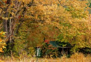 Smothered Cottage by TimLaSure