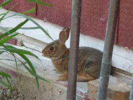 Bunny in my yard 1 by TwilitTiger