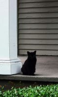 Cat On A Hot Concrete Porch by Rhymeswith0r4ng3
