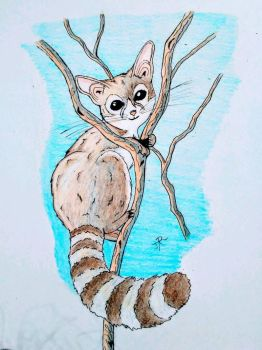 Ring Tailed Cat! by JR-Sketcher