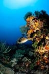 Grouper in shallow Coral by Art-Photo