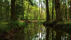 Forest Reflections by EmMelody