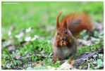 Spring Squirrel Photography by SeaWhisper