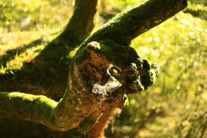 Branche by The-Underwriter