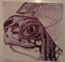 Turtle Close-up by piprxo