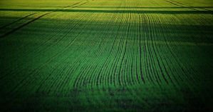 Green lines... by Csipesz