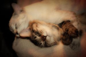 Sleeping Beauties by Chris-Tedlock