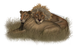 A Lion and his Queen by BreakableHorseRider