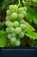 Grapes Preview by kuschelirmel-stock