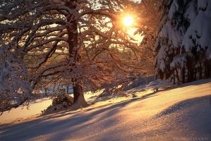 Colors on Frozen Snow by FlorentCourty