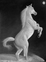 White Horse II by Beloved-chan