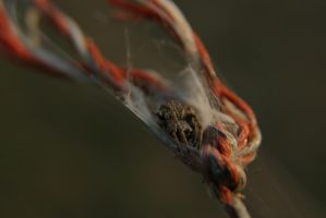 Say hi to spider! by durato
