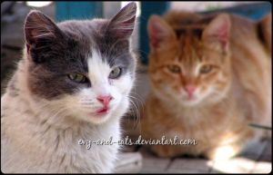 705 by evy-and-cats