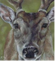 Deer in Pastels by ZEPASTELARTIST
