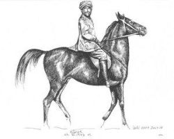 tiaret Asil Arabian No.102 by Black-White-Club