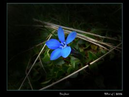 Blue flower by BPart